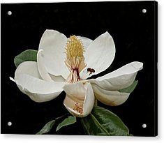 Southern Magnolia With Bee Acrylic Print by Sandra Anderson