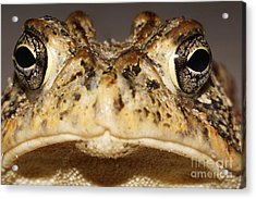 Southern Toad Close Up Acrylic Print by Lynda Dawson-Youngclaus