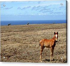 Southernmost Pony Acrylic Print by James Mancini Heath