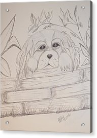 Acrylic Print featuring the drawing Spaniel Pup by Maria Urso
