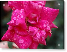 Sparkled Rose 2 Acrylic Print by Beverly Hammond