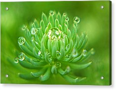 Sparkling Diamond Dewdrops Acrylic Print