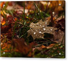 Acrylic Print featuring the photograph Sparkling Gems by Cheryl Baxter