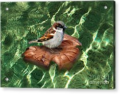 Acrylic Print featuring the digital art Sparrow On A Quest by Rosa Cobos