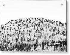 Sparse Mountain Forest In Norwegian Winter Acrylic Print by Raphael Schneider