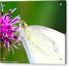 Speckled Wings Acrylic Print by Heather  Boyd