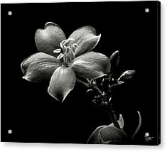 Spicy Jatropha In Black And White Acrylic Print