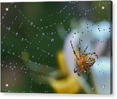 Spider Acrylic Print by Jean Noren