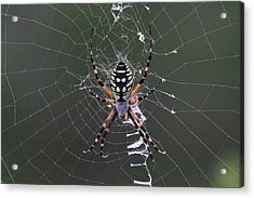 Spider Acrylic Print by Jeanne Andrews