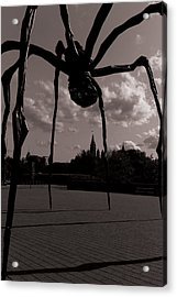 Acrylic Print featuring the photograph Spider by Josef Pittner