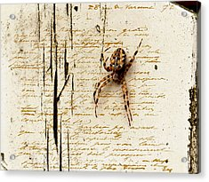 Spider Letter Acrylic Print