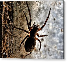 Spiders Home Acrylic Print