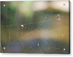 Spiderweb Acrylic Print by Michele Carter