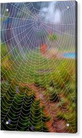 Spiderweb With Dew Drops Acrylic Print by Werner Lehmann