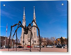 Acrylic Print featuring the photograph Spidy by Josef Pittner