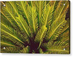 Spiked Leaves Acrylic Print by Sumit Mehndiratta