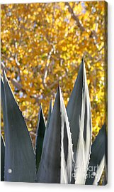 Spikes And Leaves Acrylic Print by Alycia Christine