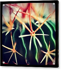 #spikes #green #plant #igaddict Acrylic Print by Ritchie Garrod