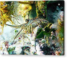 Spiny Acrylic Print by Li Newton