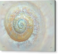 Spiral Shell Galaxy Acrylic Print by Darkmatterphotography