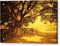 Spiritual Place. Wicklow Mountains. Ireland Acrylic Print by Jenny Rainbow