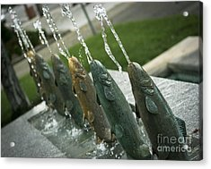 Spitting Fish Acrylic Print by David Taylor
