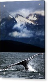 Splash From Tail Of Humpback Whale Acrylic Print by Richard Wear