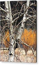 Splash Of Fall Acrylic Print by Frank Townsley