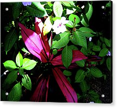 Splash Of Nature Acrylic Print by Charles Carlos Odom