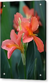Splash Of Orange Acrylic Print by Paul Slebodnick