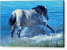 Splashing Horse Acrylic Print by FeVa  Fotos