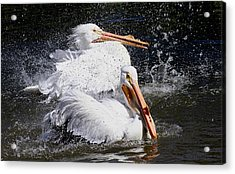 Acrylic Print featuring the photograph Splish Splash by Elizabeth Winter