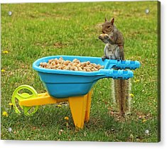 Spoiled Squirrel Acrylic Print