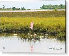 Spoonbill Savannah Acrylic Print by Alex Suescun
