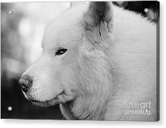 Spot In Black And White Acrylic Print by Lynda Dawson-Youngclaus