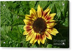 Acrylic Print featuring the photograph Spot The Bee by Jim Sauchyn