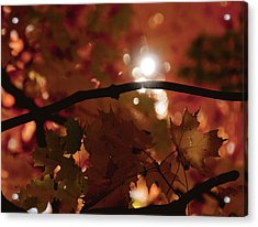 Acrylic Print featuring the photograph Spotlight On Fall by Cheryl Baxter