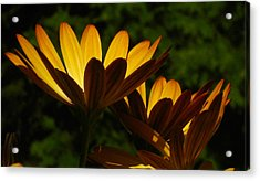 Spotlight On Ganzia Acrylic Print