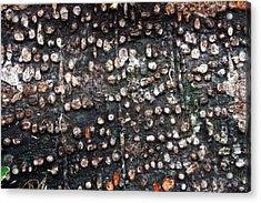 Spotted Bark Acrylic Print by Jennifer Bright
