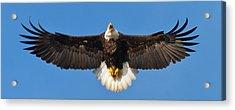 Acrylic Print featuring the photograph Spread Eagle by Randall Branham