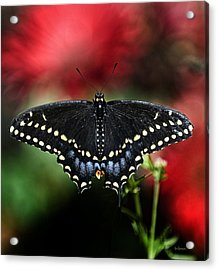 Acrylic Print featuring the photograph Spread The Wings by Lisa  Spencer