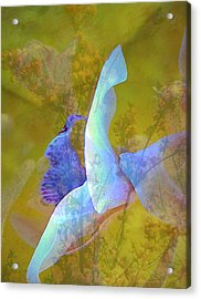 Spread To The Wind Acrylic Print by Shirley Sirois