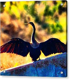 Spread Your Wings And Prepare To Fly Acrylic Print