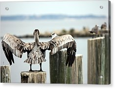 Spread Your Wings Acrylic Print by Deborah Hughes
