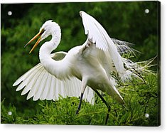 Spreading His Wings Acrylic Print by Paulette Thomas