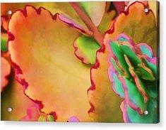 Spring 2 Acrylic Print by Dawn Nicoli