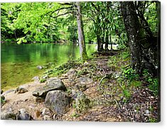 Spring Along Cranberry River Acrylic Print by Thomas R Fletcher