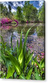 Spring At Magnolia Plantation - Charleston Sc Acrylic Print by Drew Castelhano
