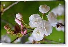 Acrylic Print featuring the photograph Spring Beauty by Rima Biswas