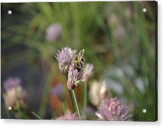 Acrylic Print featuring the photograph Spring Bee by Serene Maisey
